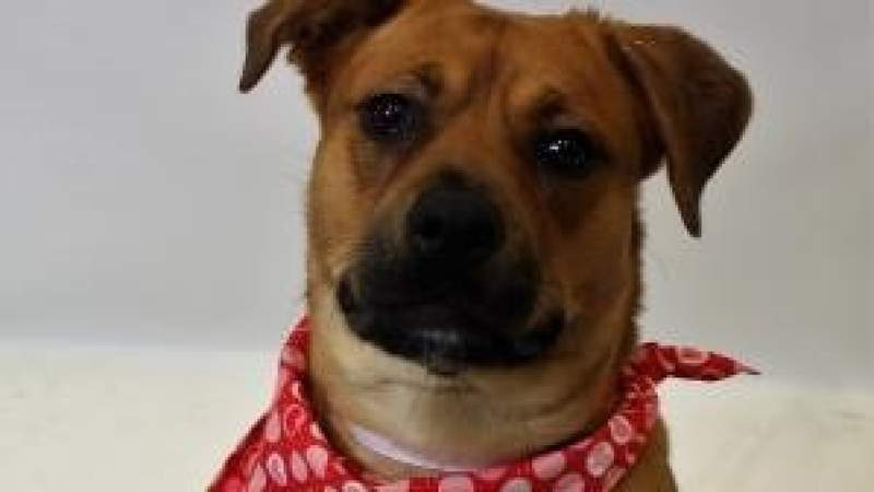 Pet of the Week - Winter pet care on Live in the D