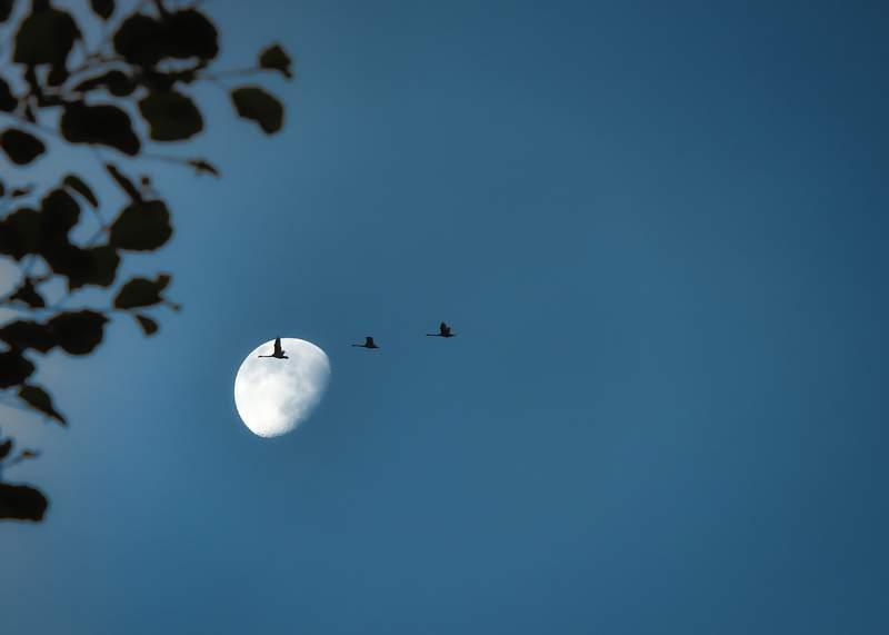 Birds fly at night.