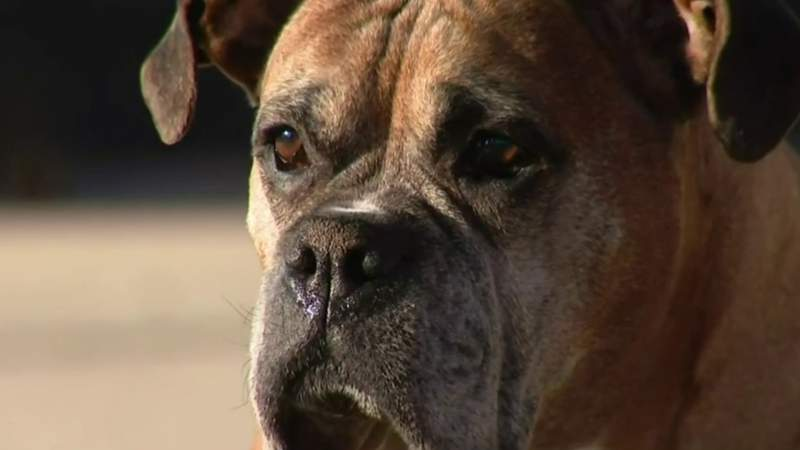 New Eastpointe ordinance sets rules for when dogs can be left outside