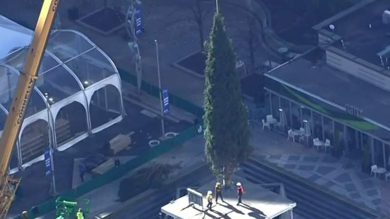 Detroit's Christmas tree arrives at Campus Martius