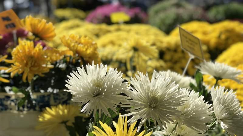 Flowers at Ann Arbor Farmers Market on Sept. 30, 2018 (Photo: Meredith Bruckner)