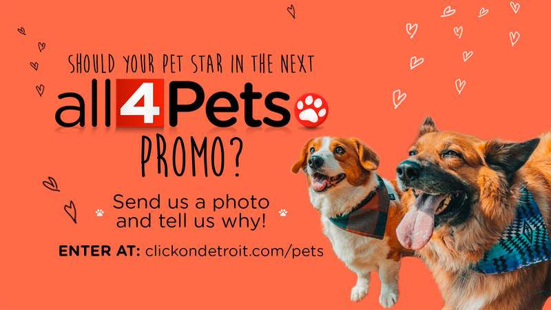 All 4 Pets - Put Your Pet in a Promo