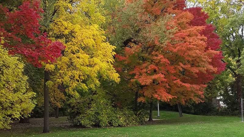 Fall colors, taken at Shiawassee park in Farmington, October 10, 2020.