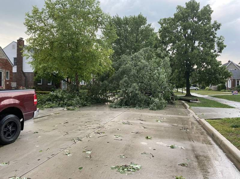 Tree down in Grosse Pointe Woods after storms June 10, 2020.