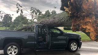 A tree fell on an occupied truck in Troy on July 29, 2019. (WDIV)
