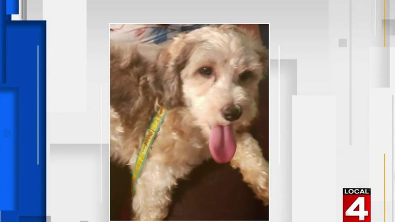 Pet of the Week: Lucky the dog