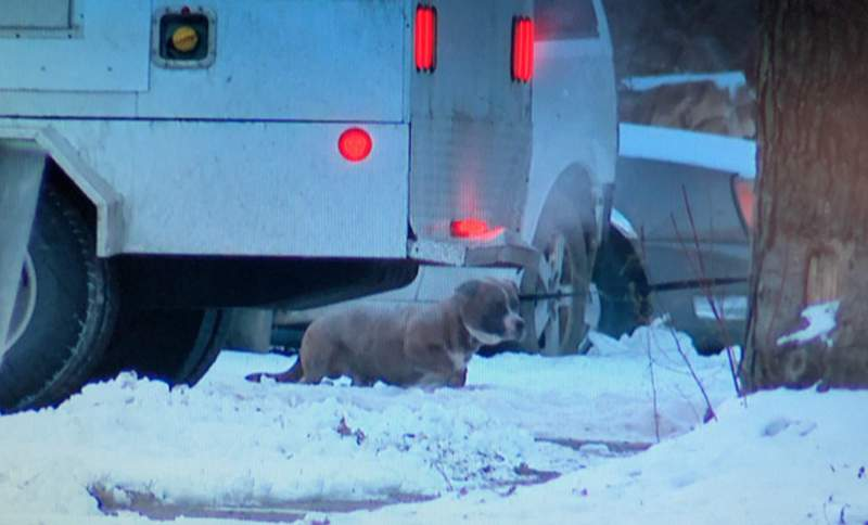 A dog shown on Longacre Street in Detroit on Jan. 29, 2021 after an attack that injured a young boy.