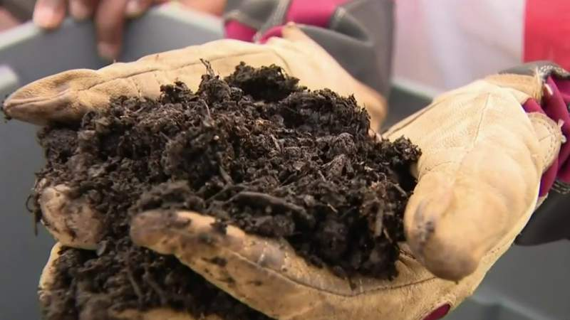 How to supercharge your soil for healthier flowers, vegetables