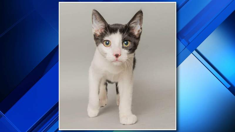 Shelter to Home Rescue in Wyandotte is asking for assistance identifying a man accused of stealing a kitten.
