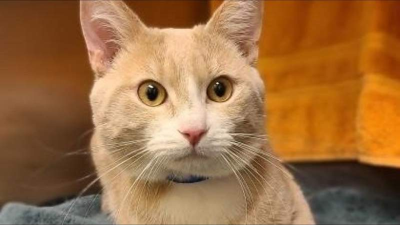 Pet of the Week - Celebrate pet diversity on Live in the D