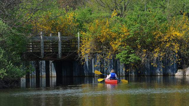 Kayakers on the Huron River at Gallup Park (Credit: Destination Ann Arbor)