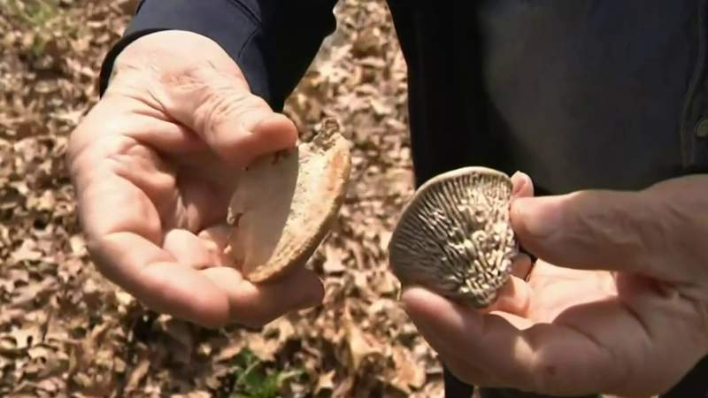 Mushroom hunting booms amid pandemic