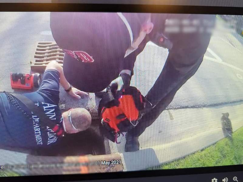 A member of the Ann Arbor Fire Department reaches into a storm drain to rescue ducklings who became separated from their mother on May 1, 2021.