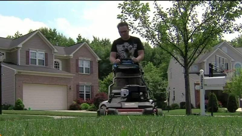 Live in the D - What's the Buzz: Lawn Envy