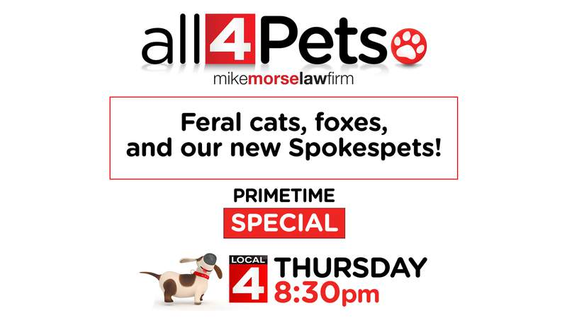 All 4 Pets Special - Thursday 8:30pm