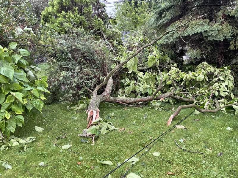 A broken tree branch in Farmington, Mich. on July 7, 2021.