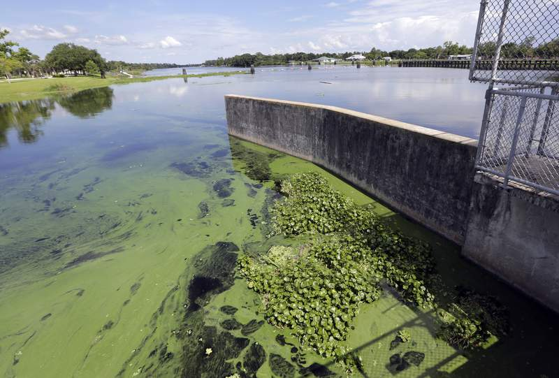 FILE - In this Thursday, July 12, 2018 file photo, an algae bloom appears on the Caloosahatchee River at the W.P. Franklin Lock and Dam in Alva, Fla. A study released on Wednesday, Jan. 6, 2021, shows Americas rivers are changing color, mostly because of what people are doing. (AP Photo/Lynne Sladky)