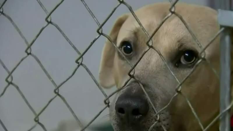 New Michigan Senate bill targets dangerous dogs, but not breeds