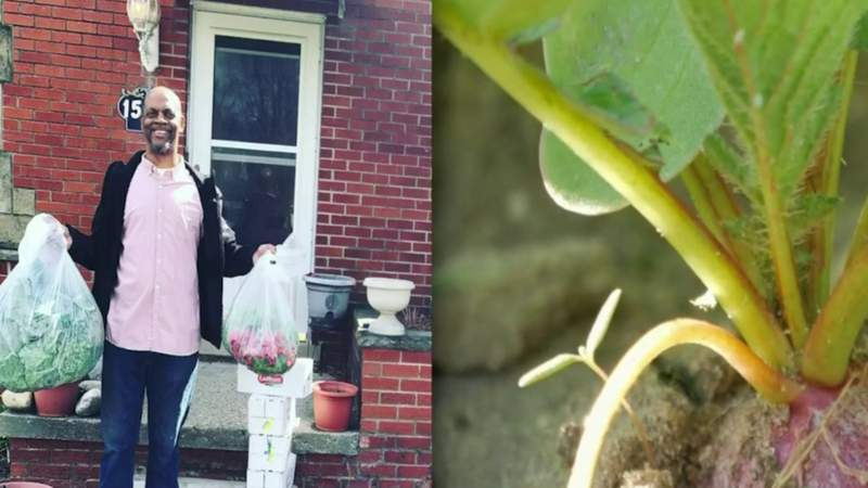 How to use your garden to help others during pandemic
