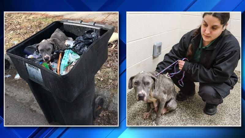 Authorities are looking for the public's assistance after a live dog was found inside a Detroit trash can.