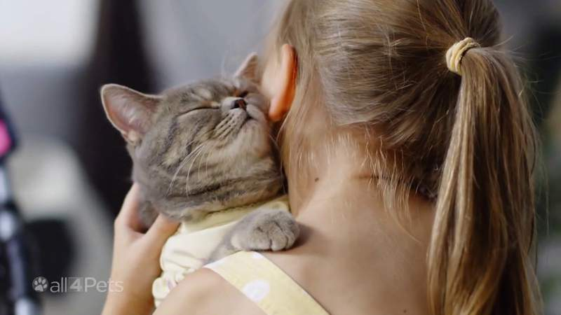 How to ease pets back into regular life after the pandemic