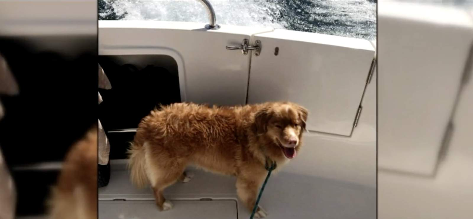 Family rescues dog nearly 4 miles offshore in Lake Michigan