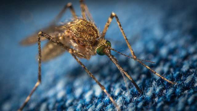 Mosquito (Pixlr)