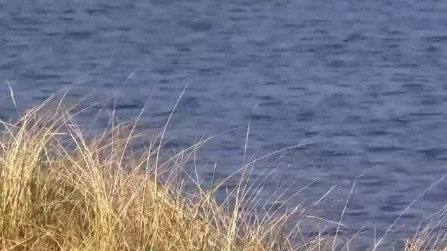 lake michigan drownings 2020