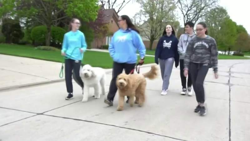 Stay-at-home orders mean more dog walks, healthier families