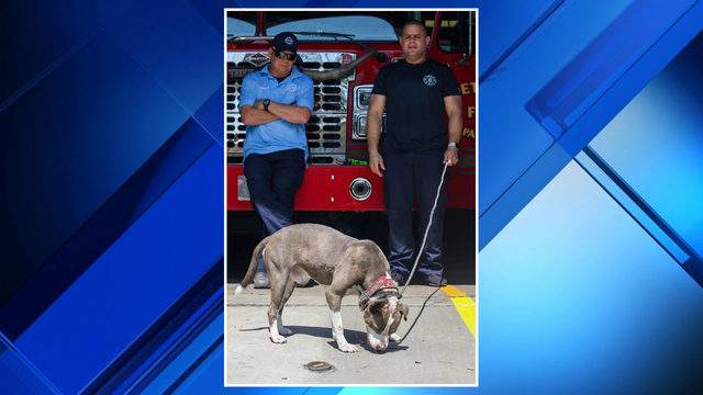 Detroit firefighters with a dog they rescued on Aug. 1, 2019. (WDIV)