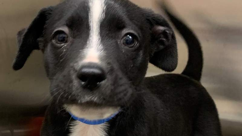 Pet of the Week - Safe holiday gifts for pets on Live in the D