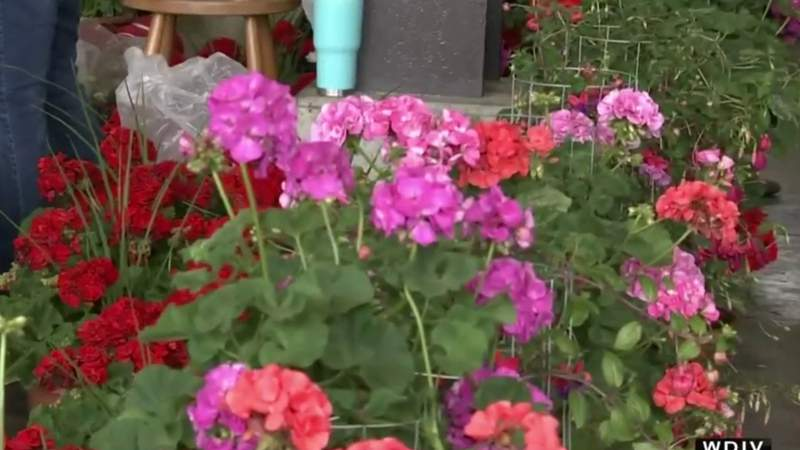 The New Twist to Flower Day with Eastern Market on Live in the D