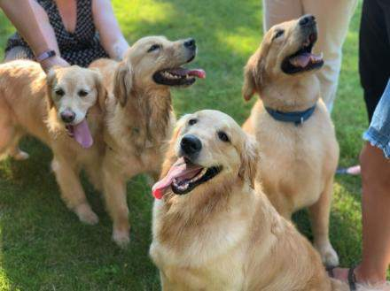 Michigan Medicine's hospital dogs Denver, Anna, Bindi, and Fawn.