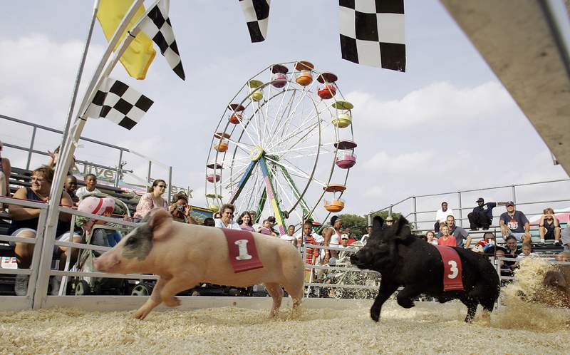 FILE - In this Aug. 22, 2007 file photo, pigs race at Pork Chop Downs at the Michigan State Fair in Detroit. Democratic Gov. Jennifer Granholm canceled the fair, saying debt-ridden Michigan could no longer afford to subsidize it. Granholm's decision makes Michigan the only Midwestern state and one of few nationwide without a state fair. The Michigan State Fair had been a state tradition for 160 years. (AP Photo/Paul Sancya, File)