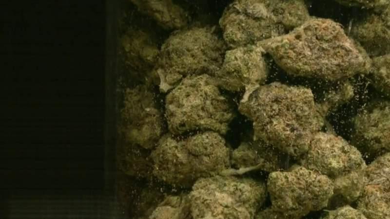Washtenaw County prosecutor to no longer charge people with marijuana offenses