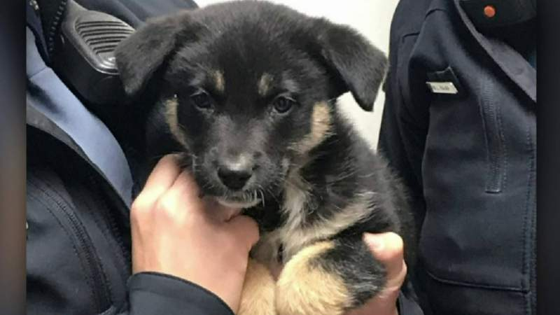 Michigan State Police rescue puppy left in freezing car in Detroit