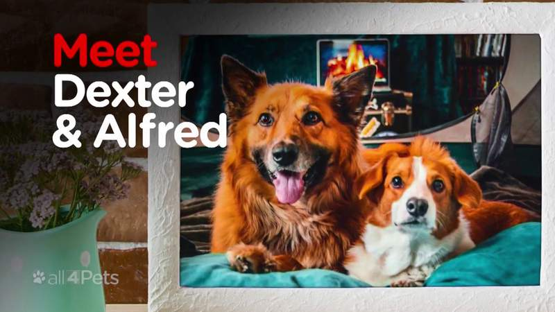 Meet the newest All 4 Pets spokespets: Dexter and Alfred
