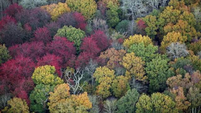 michigan peak fall colors 2020