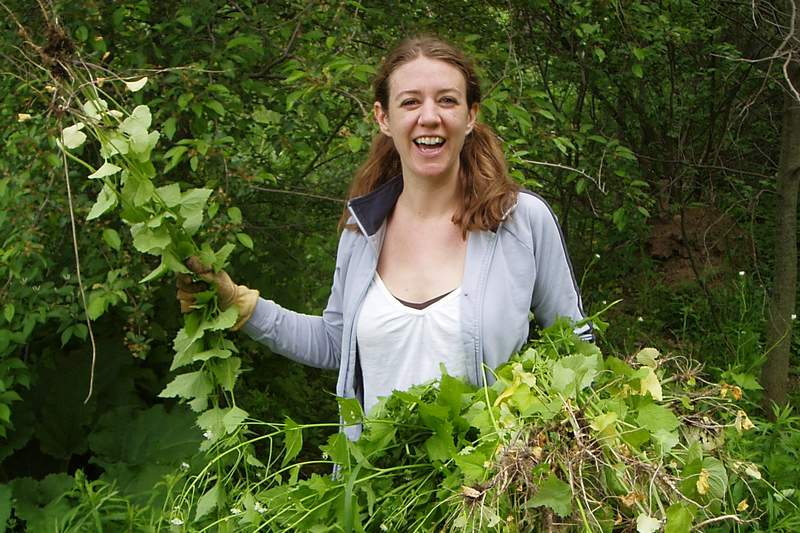 Help the city of Ann Arbor's Natural Area Preservation by pulling invasive plants this week in your yard and nature areas.