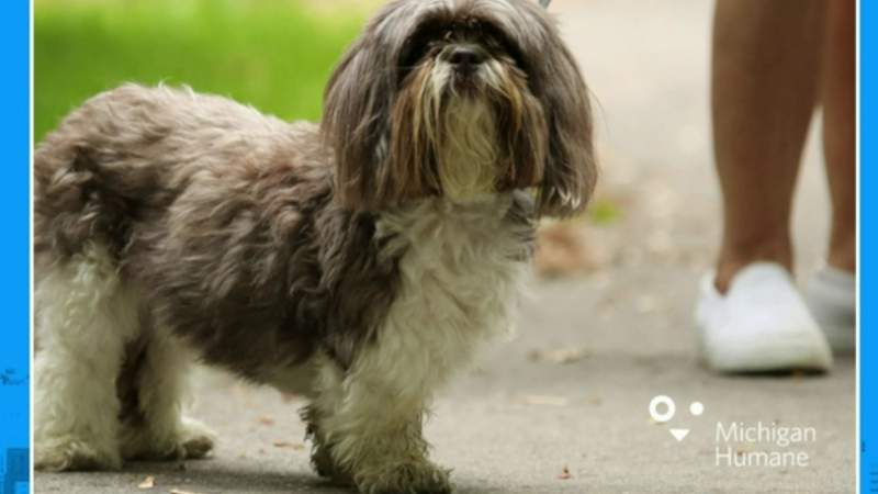 Pet of the Week - Michigan Humane Presents Mutt March on Live in the D