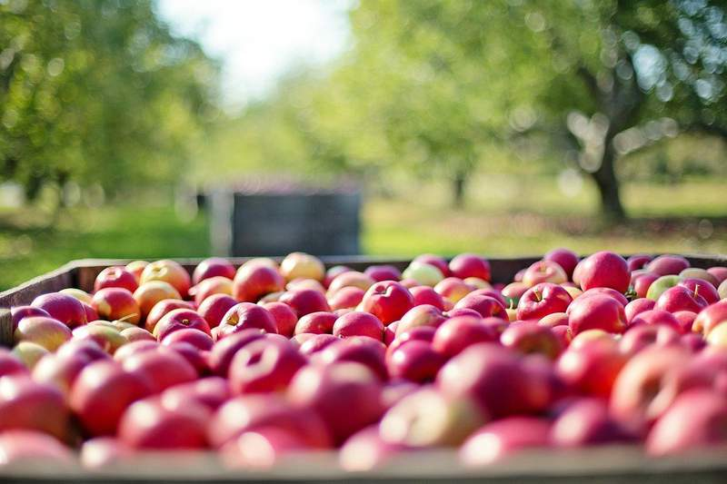 Apple farm.