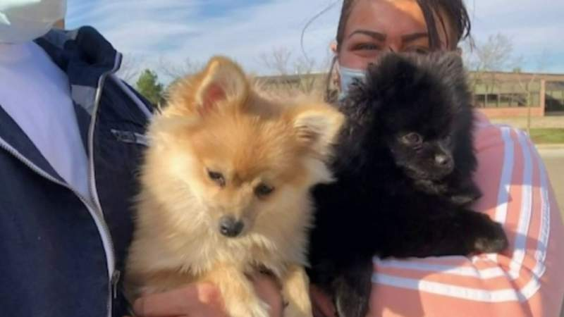Stolen pomeranians returned to owners in Troy