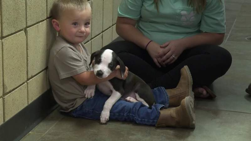 Local boy finds companion in dog from animal shelter