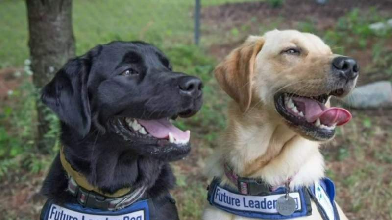 How to help give dogs to the blind