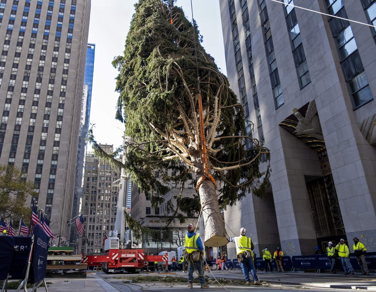 Rockefeller Center Christmas Tree turns on, with virus...