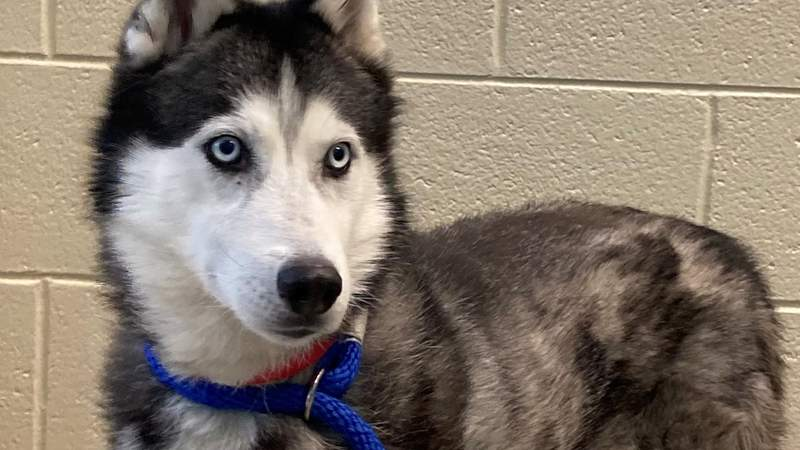 Pet of the Week - Day of Giving telethon on Live in the D
