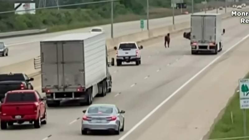 Horse gets loose on I-75 in Monroe County