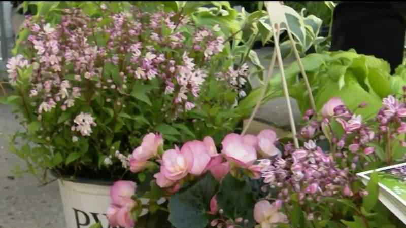 LITD Eastern Market Flowers