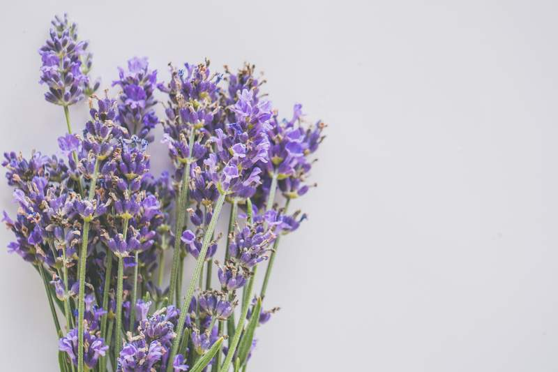 Lavender. It's pretty.