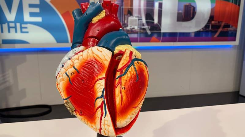 HVI Heart Month on Live in the D